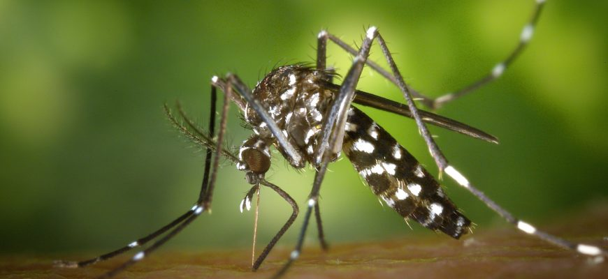 Из-за коронавиурса на Ибице нашествие комаров-убийц